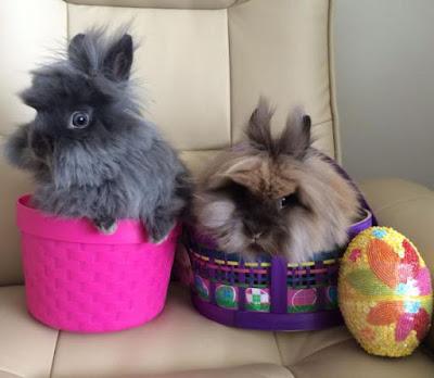 Simpatica imagen de conejos