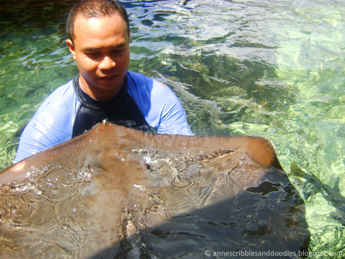 Manila Ocean Park: Sharks and Rays Encounter   Anne's Scribbles and Doodles