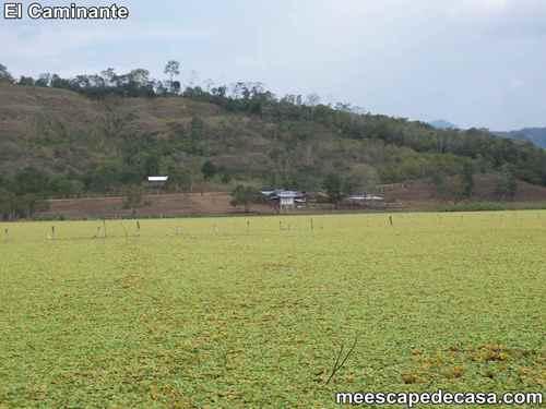 Laguna Ricuricocha (San Martín, Perú) - 2