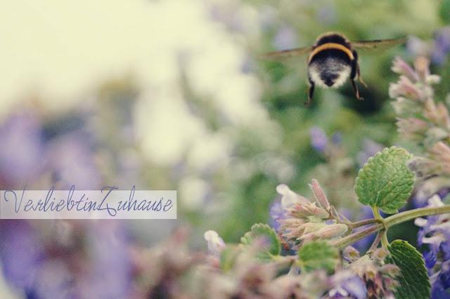 Makrofotografie Katzenminze mit satter Biene