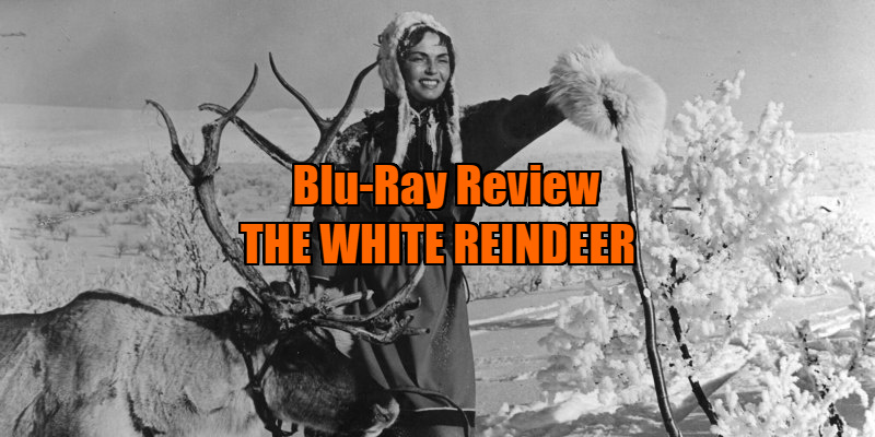 the white reindeer review