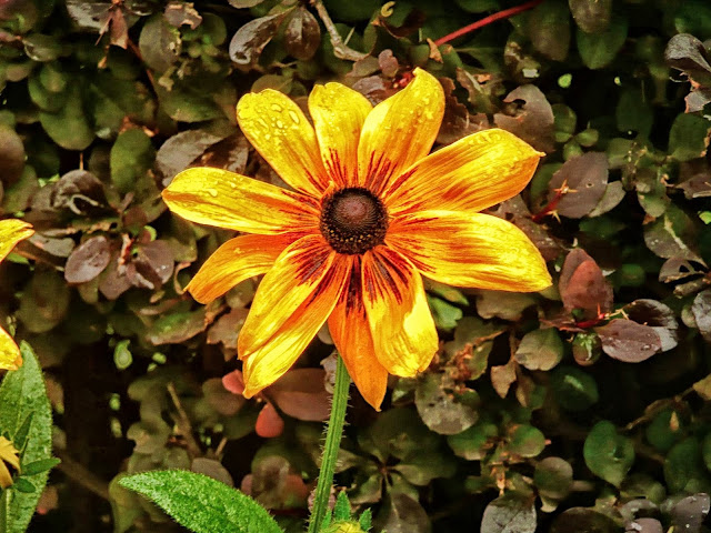 Una flor amarilla
