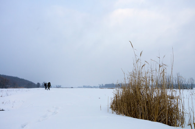болота біля Мохнача