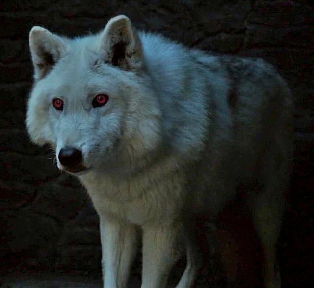 Fantasma Lobo Huargo Blanco de Juego de Tronos