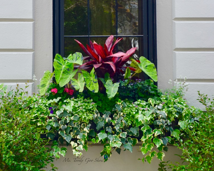 There are so many flowerboxes in Charleston, SC - a sheer delight for passersby. | Ms. Toody Goo Shoes