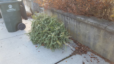 When do they pick up my Christmas tree?