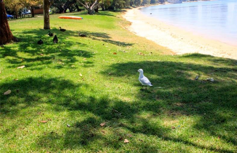Poor seagull, we refused him food