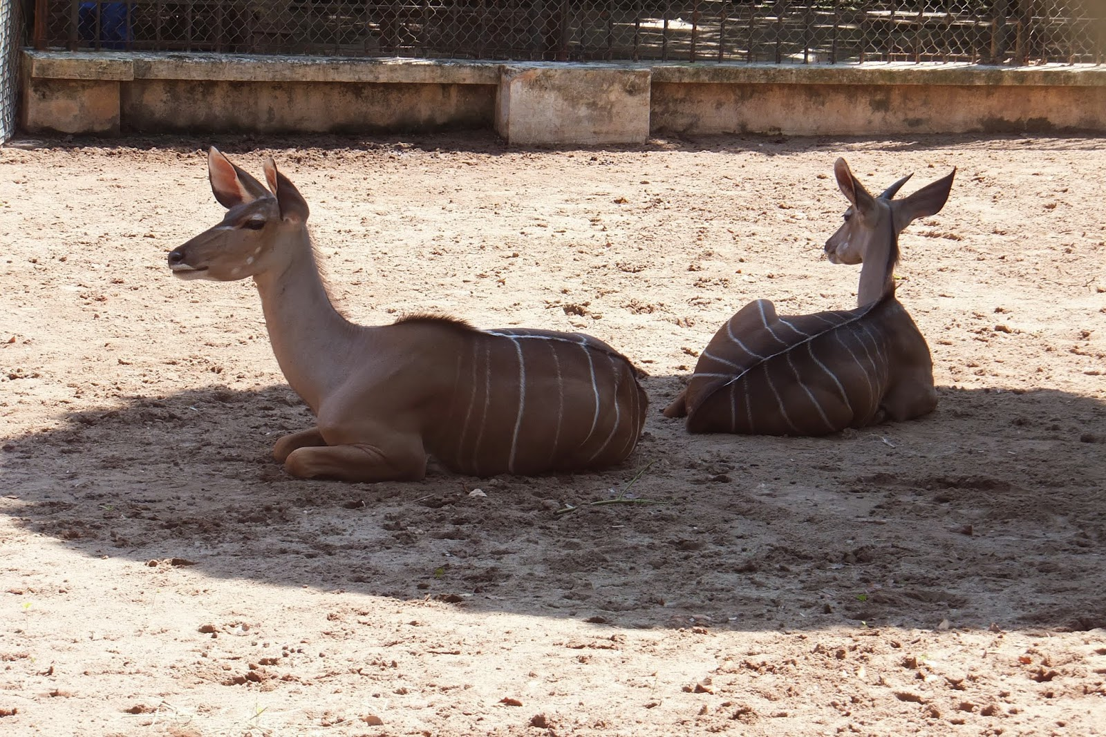 hanoi-zoo ハノイ動物園謎の動物