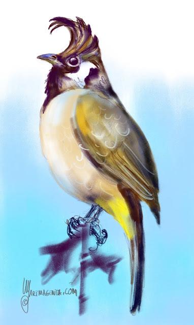 Himalayan bulbul bird painting by Artmagenta