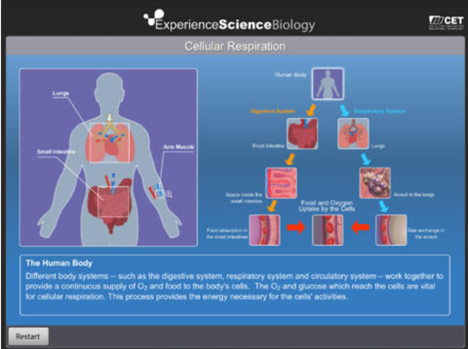 4 Useful iPad Apps to Help Students Learn about The Human Body ...