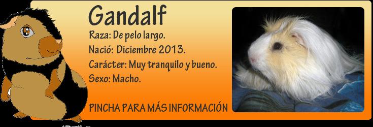http://almaexoticos.blogspot.com.es/2015/01/gandalf-el-amor-hecho-cobaya-en-adopcion.html