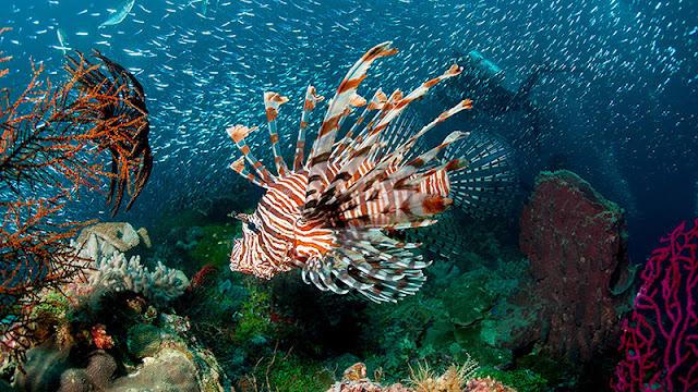 Taman Laut Nasional Kepulauan Wakatobi