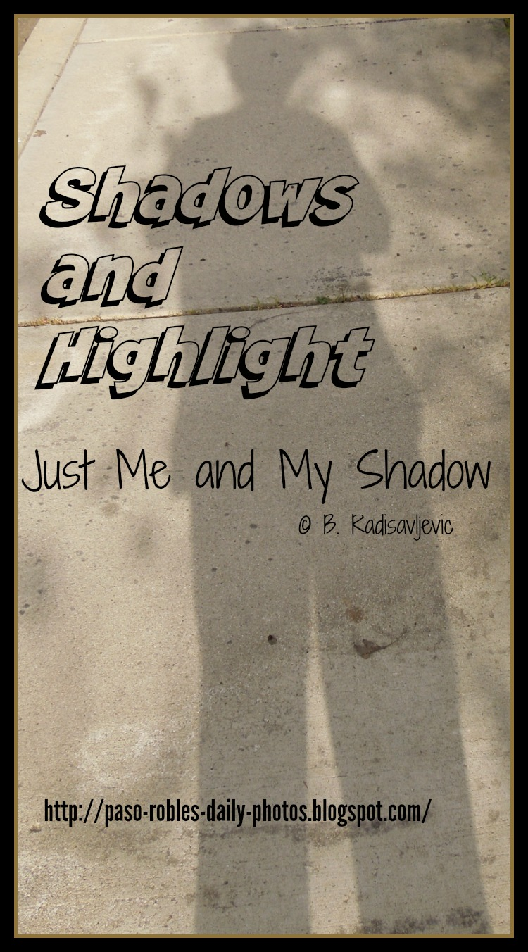 Shadows and  Highlight: Shadows of Me and a Dying Mullein