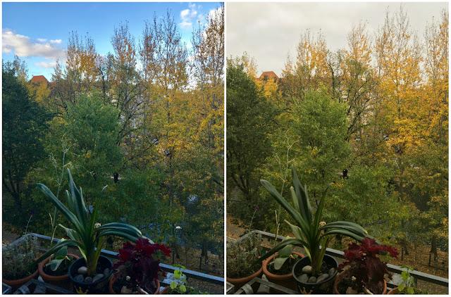 Balkonblick: Pflanzen, Bäume, Himmel, Wolken, Dachfirst