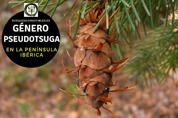Lista de especies del Género Pseudotsuga, Familia Pinaceae en la Península Ibérica.