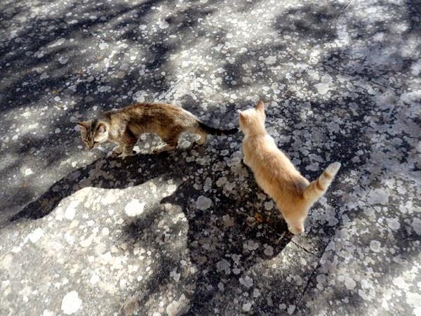 kittens mallorca
