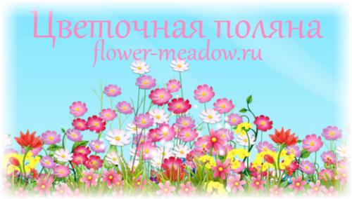 Цветочная поляна игра с выводом денег