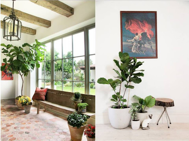 Aside from the air-quality benefits, decorating with plants is one of the easiest ways to make your home feel more lively and relaxed. They said using indoor plants is a key to a fresh and colorful interior.