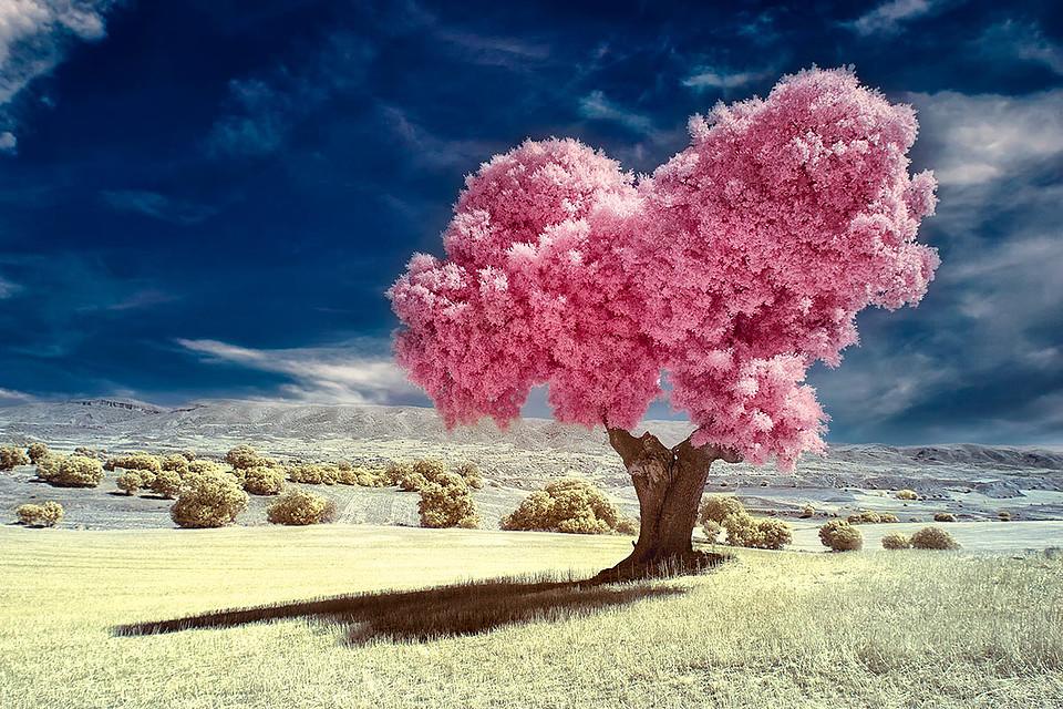 Banco de Imágenes: Árbol Rosa by DolceFoto - Pink Tree
