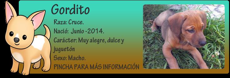 http://almaexoticos.blogspot.com.es/2014/08/gordito-abandonados-en-un-cubo-de-basura.html