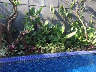 Rumput Gajah Mini -Rumput Gajah Varigata -Rumput Swiss -Rumput Golf -Rumput Jepang / Peking -Rumput Gajah -Rumput Embun dll. Berbagai Jenis Tanaman Hias Seperti : -Bonsai Cemara Udang -Beringin Korea -Sikas -Palem Merah -Pandan Bali -Bambu Panda -Kamboja Bali -Bambu Jepang -Pohon Pelindung, Taman bunga minimalis ,harga pembuatan Taman per meter persegi M2, Taman gaya Bali,  Taman gaya Jepang,  Taman kering