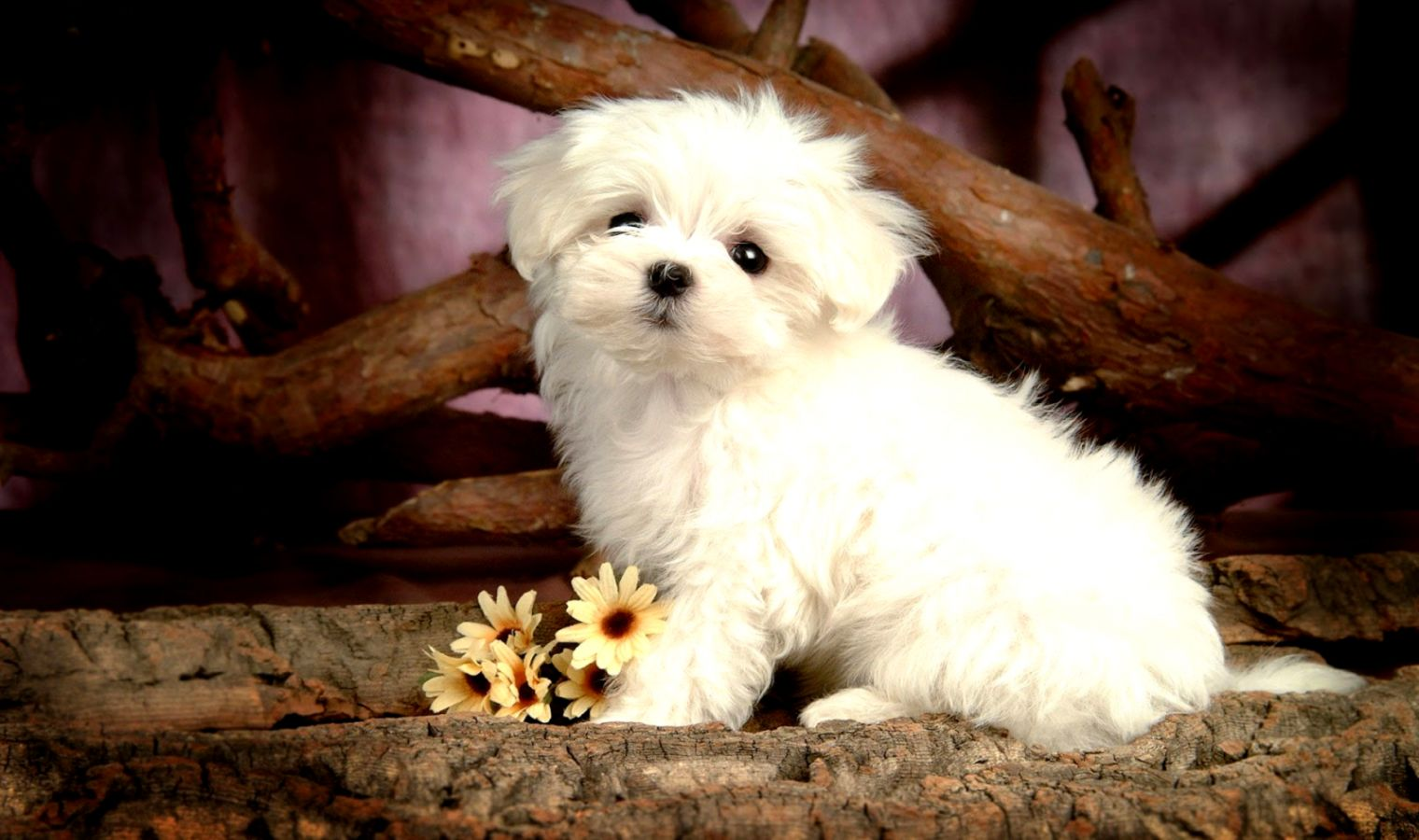 Cute Dogs Wallpaper Puppy The Last Wallpapers