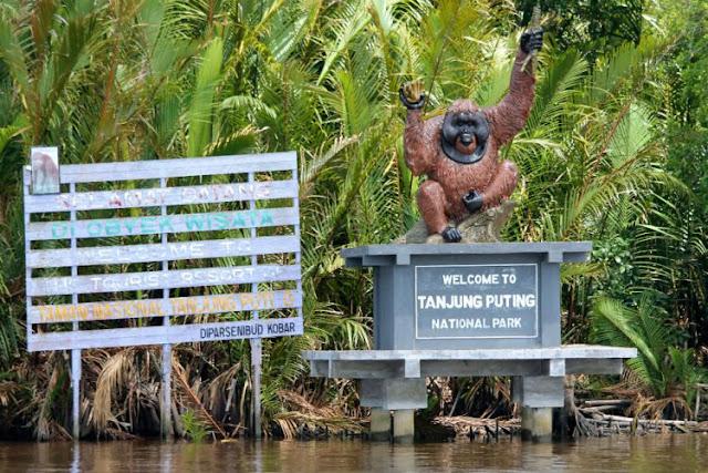 Tips Buat Anda yang Ingin Liburan di Tanjung Puting, Asik Lho!
