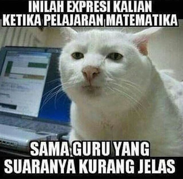 13 Meme 'Kucing' Ini Lucu Banget Bikin Gemes Campur Ngakak ...
