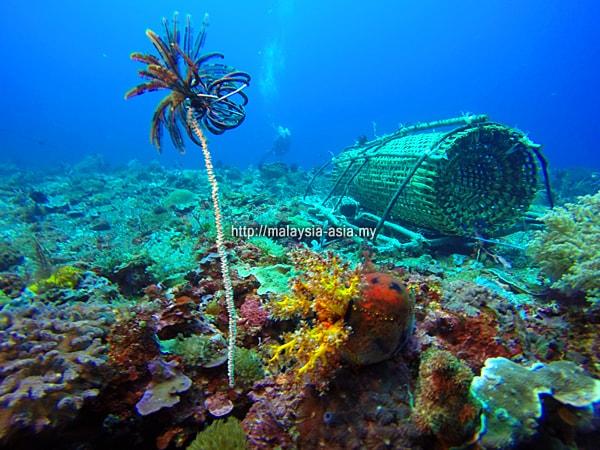 Bubu Fish Trap Alor Island