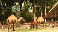 Sahi Yogyata Sahi Jagah,Camel hindi story, सही योग्यता सही जगह