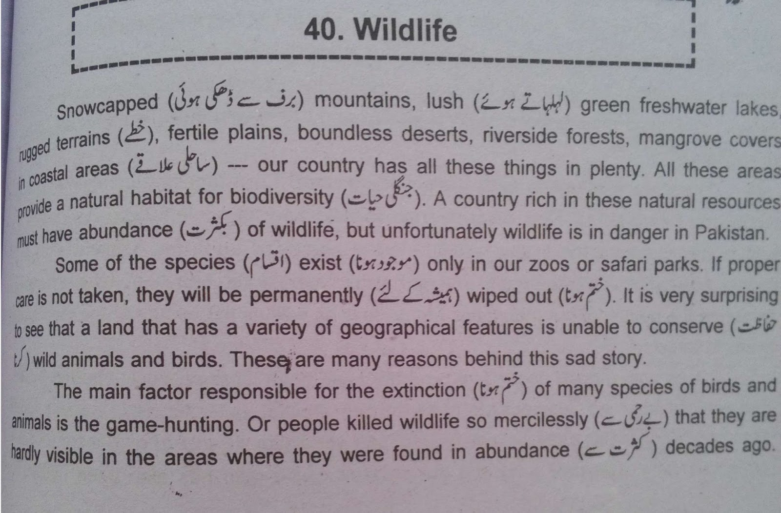 wild animal essay in english Learn english basics - animal vocabulary - concentrating on british animals  in britain, we have a lot of wild animals birds, fish, insects and mammals.