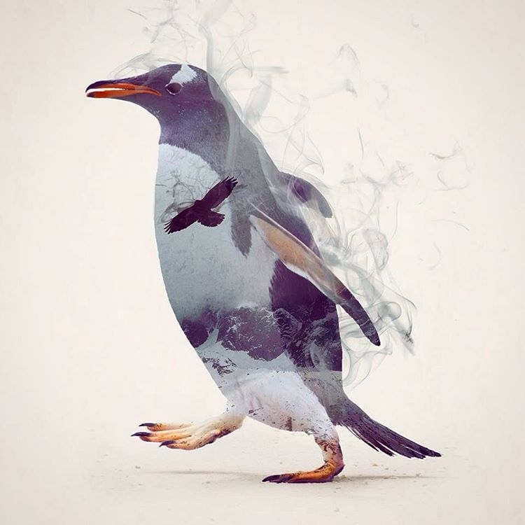 06-Penguin-Daniel-Taylor-Ghostly-Animals-in-Manipulated-Photographs-www-designstack-co