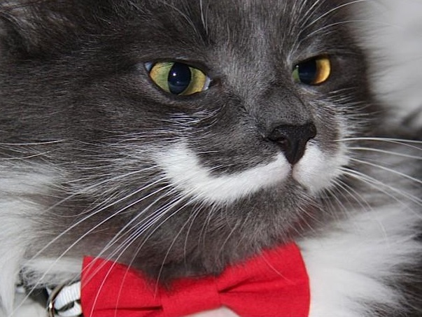 Mustachio and Bow Tie