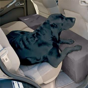 cães sendo transportados em veículos