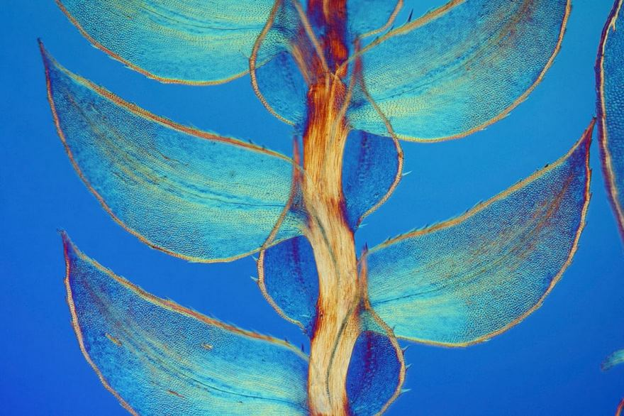 2016 Nikon Macro Photo Contest Winners Show The World Like You've Never Seen Before - Seventh Place. Leaves Of Selaginella
