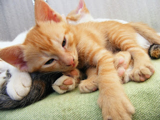 Two kittens lay together contently on a blanket.