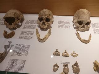 Restos hominidos. Yacimiento de Dmanisi
