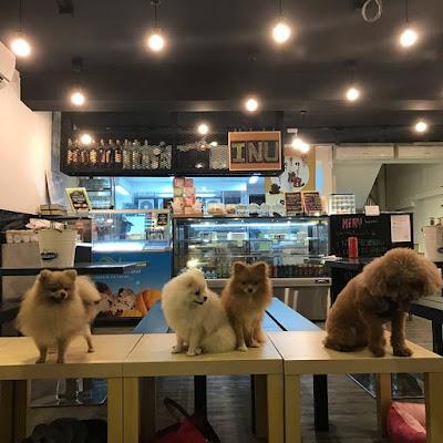 inu edp dog friendly cafe singapore