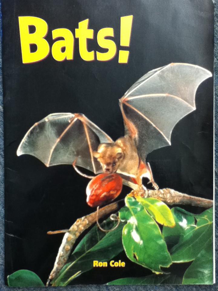 What Are Bubble Diagram Semi Trailer Wiring 7 Way Mrs. Bushong's Second Grade: Bat And Pumpkin Nonfiction Unit