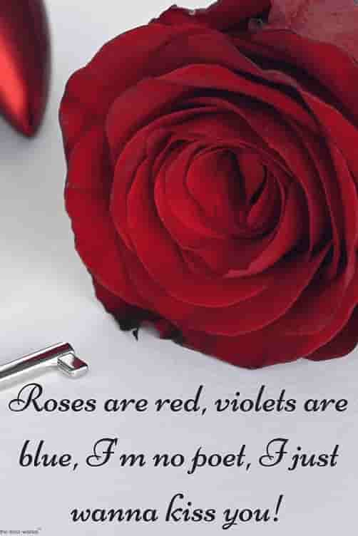 sayings for her with red rose
