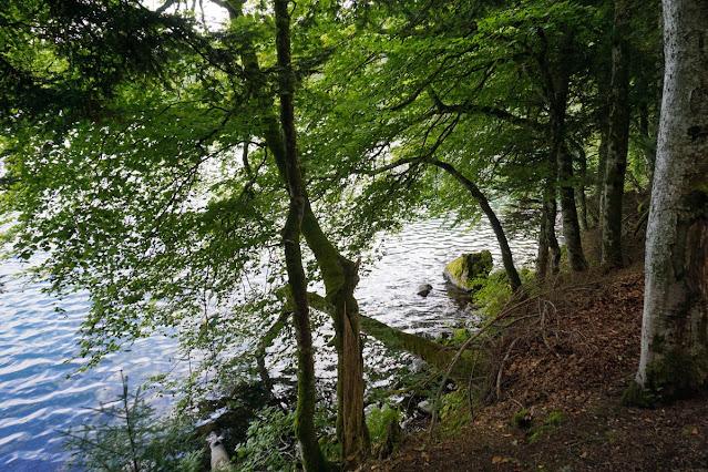 Lacul Pavin Auvergne Masivul Central Francez