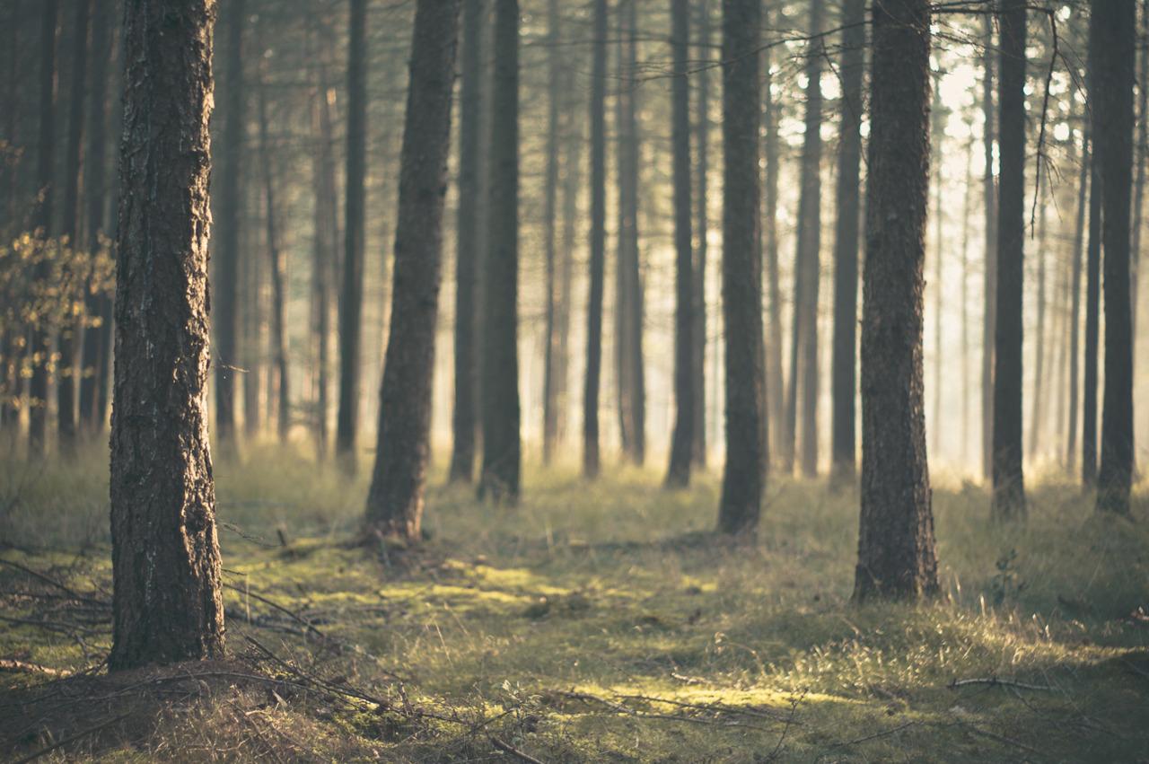 hutan pagi