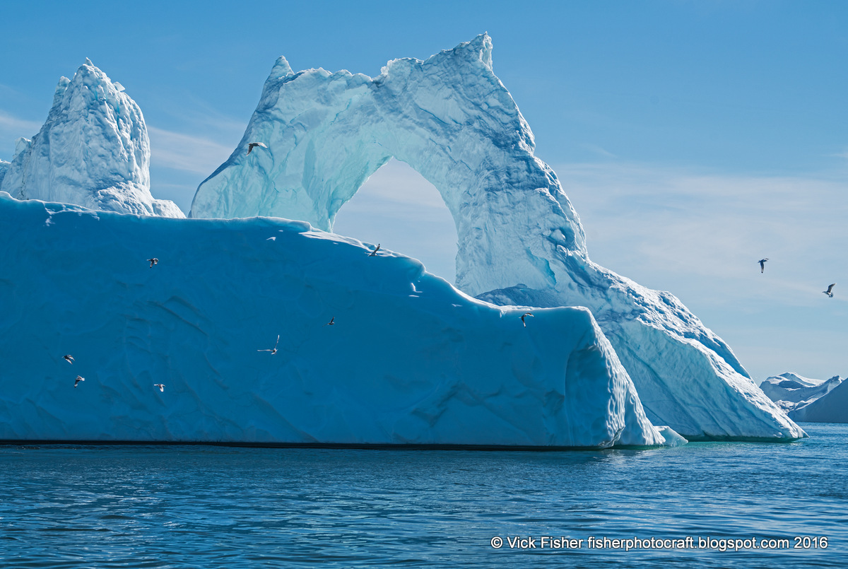 greenland iceberg humpback whale seagull sea ilulissat travel adventure tourism tour vacation traveler traveling boat ice ocean bay cold freezing