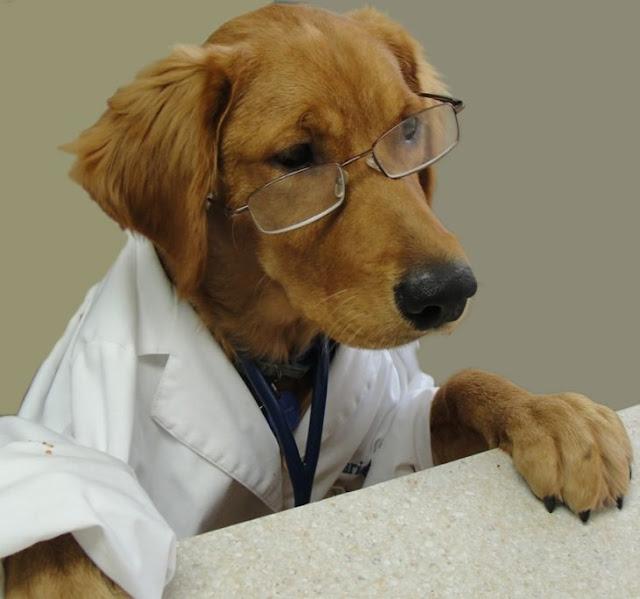 Tener un perro reduce los riezgos de ataque al corazón
