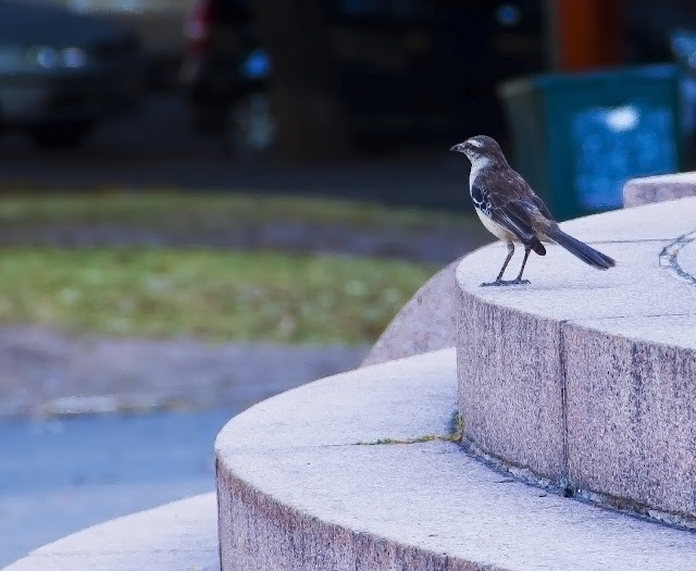 Pájaro en primer plano