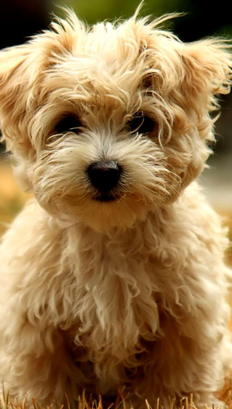 Pictures Of Dogs Wallpaper Safari Wallpapers