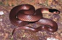 yılan kaç sene uyuyor