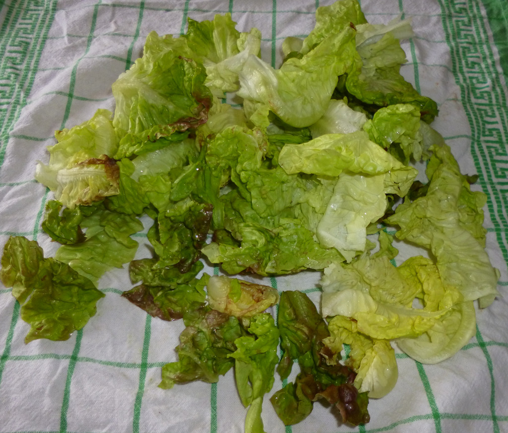 je m 39 clate avec mes 10 doigts conserver la salade apr s. Black Bedroom Furniture Sets. Home Design Ideas