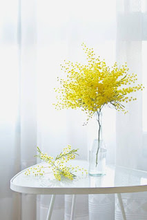 Gambar Bunga Akasia yang Indah 9
