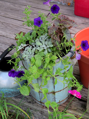planter with petunias and begonia
